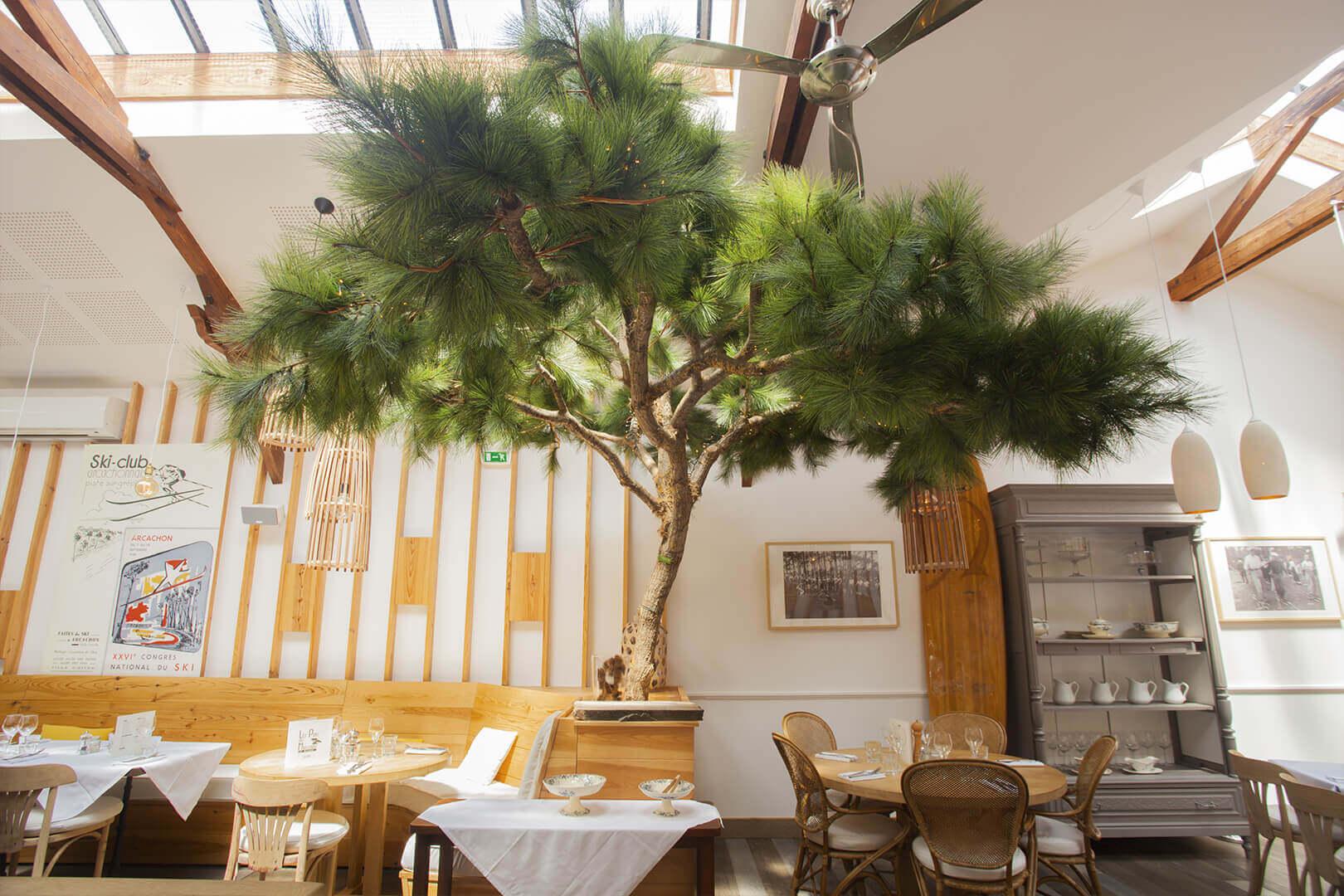 restaurant unique avec pins l'interieur pins moulleau arcachon