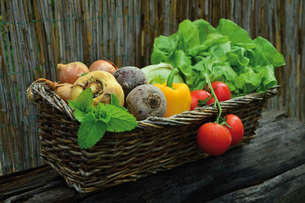 Bio Linéaires Cap Ferret Bassin organic food nature écologie Lidl labels qualité alimentation agriculture biologique santé légumes fruits