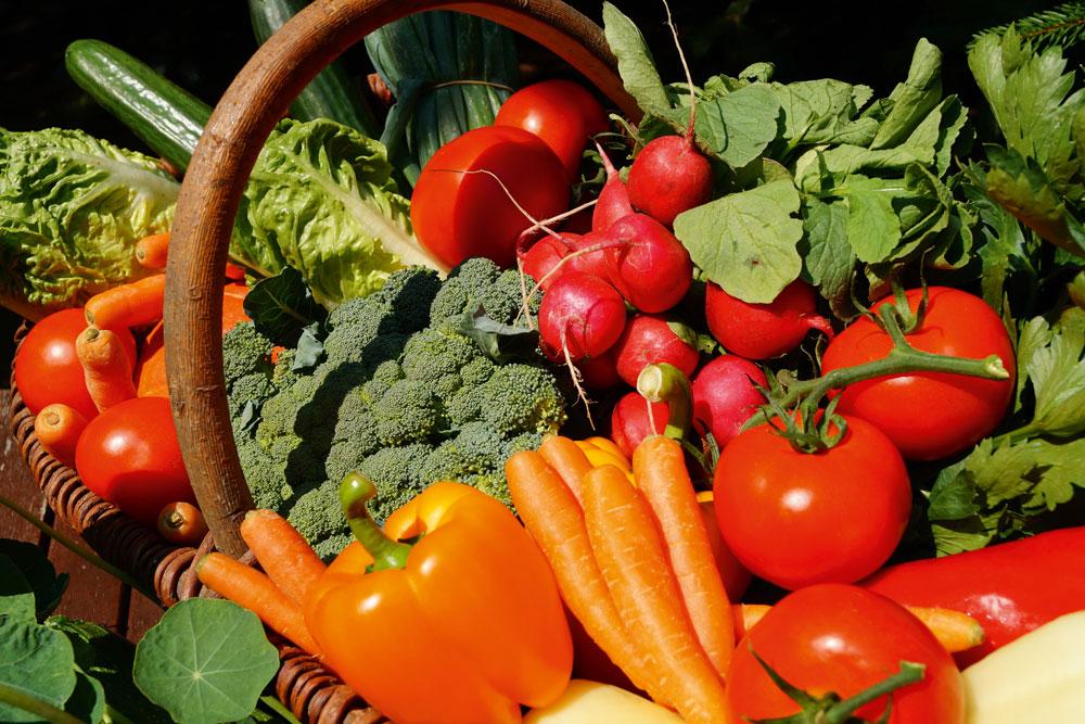 Bio Linéaires Cap Ferret Bassin organic food nature écologie Lidl labels qualité alimentation agriculture biologique santé légumes panier repas